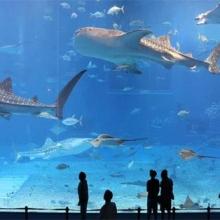 Dubai Aquarium with Underwater Zoo (Small)