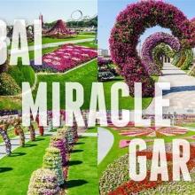 Dubai Miracle Garden (Small)