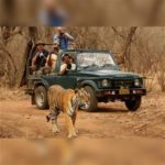 RANTHAMBHORE … and Beyond