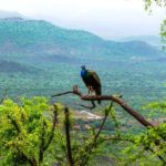 EXPERIENCE RAJASTHAN IN MONSOON