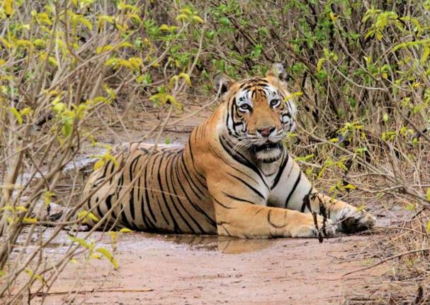 Sariska-National-Park-Source-thehindu